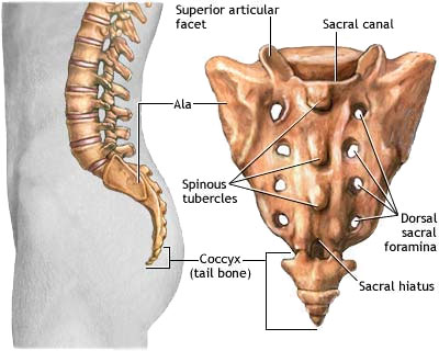 Coccyx pain is also referred to as Coccydynia.