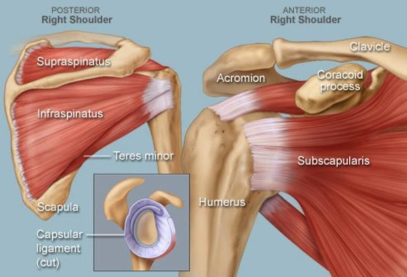 rotator cuff syndrome causes shoulder pain.