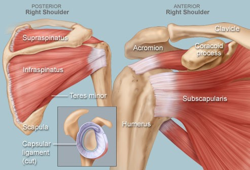 shoulder impingement syndrome causes shoulder pain.